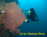 Scuba Diving, Negros Island resorts hotels tour packages
